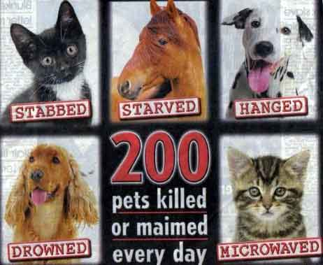 stop animal cruelty graphics for myspace