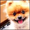 cute pompom